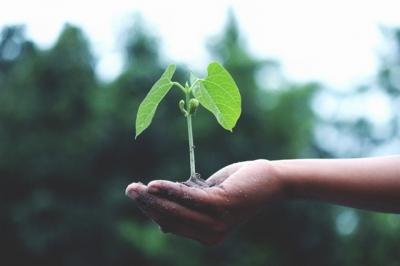biljka-u-šaci