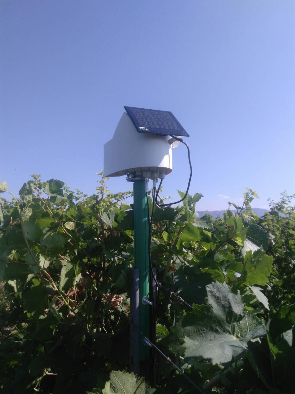 agroNET uredjaj u vinogradu